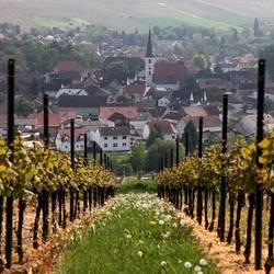 Weinberg Stadecken-Elsheim Rheinhessen